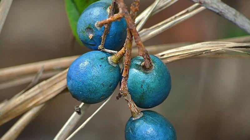 blue marble tree